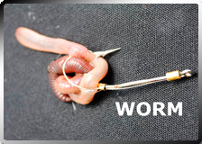 Fish Hooks Hold Worm Bait